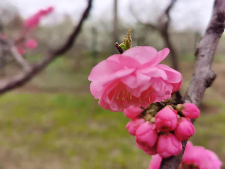 <b>春</b>