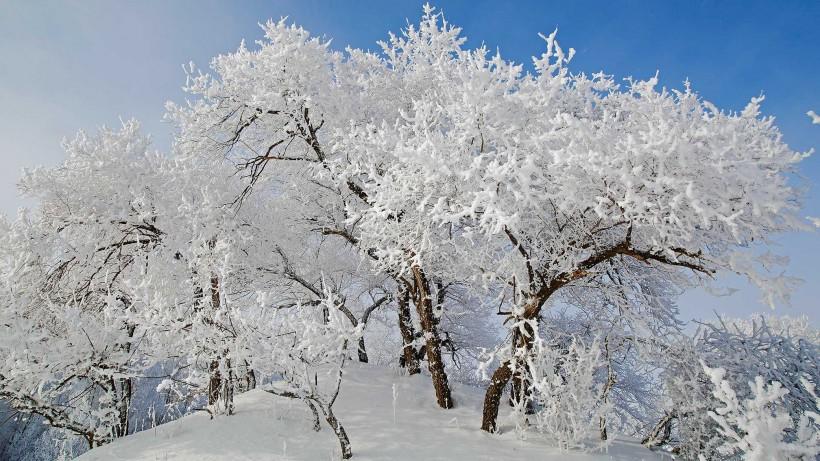 坝上草原冬景雾凇