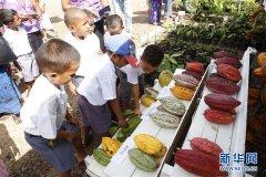 2019年斐济全国农业展举行