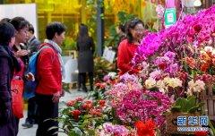 <b>年宵花展迎春节在北京举行</b>