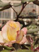 <b>那朵孤独的花</b>