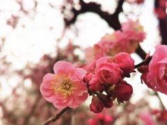 <b>花开是良辰,愿你遇良人</b>